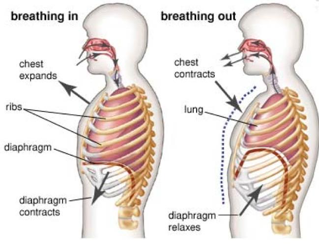Somatic Systems Institute Breathlessess Shortness Of Breath
